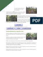 Agrofloresta Para Agricultura Familiar