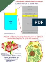 L05 Membranes