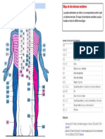 Mapa de Dermatomas de Henry Head