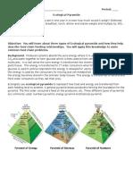 Ecological Pyramids Worksheet (1)