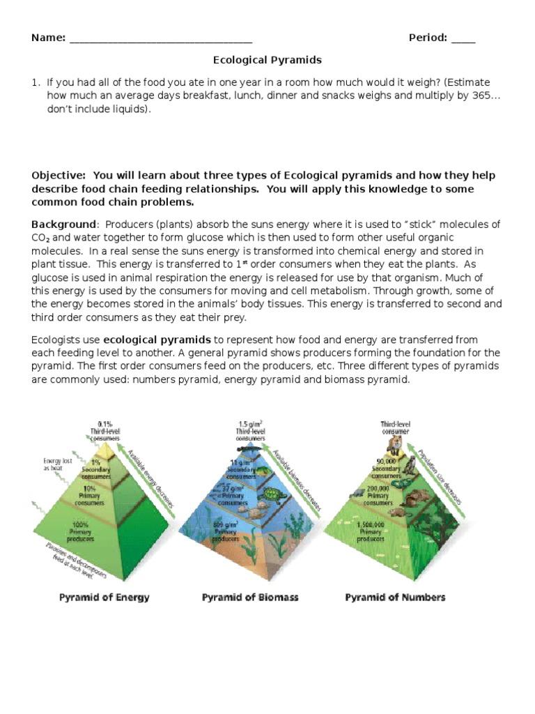 Ecological pyramids worksheet worksheets for school toribeedesign ecological pyramids worksheet 1 ecology eating robcynllc Images