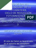 CICLO_DE_CALVIN.ppt