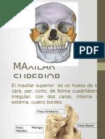 maxilarsuperior-130205185127-phpapp02