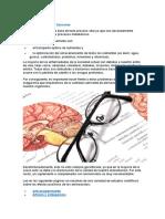 Los Aminoácidos y Sus Funciones. Alimentos Ricos en Proteina y Funciones de Las Proteinas.