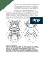 Acarapis woodi
