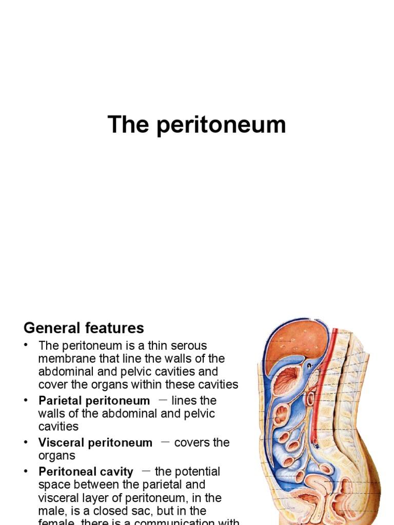 Anatomy of Peritoneum | Lymphatic System | Peritoneum