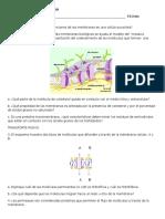 Guia de Membrana Celular