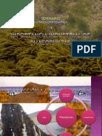 seminario_phaeophytas