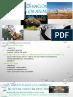 Conservación Del Agua en Animales Terrestres Power