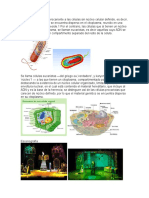 celulas procariotas