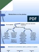 Metabolismo en Las Plantas