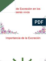 Función de Excreción en Los Seres Vivos