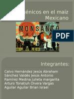 Transgénicos en El Maíz Mexicano