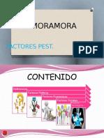 Zamoramora Pest