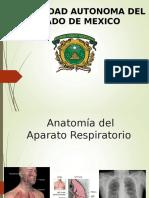 aparato_respiratorio