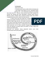 Morfologi dan Anatomi Nematoda.pdf