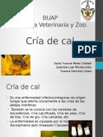 Vacunacion en Aves Organos Linfoides.