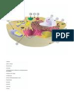 estruturas celulares e suas funções.docx
