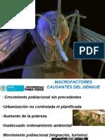 Presentacion Dengue