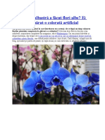 orhideea albastra