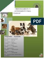 Asesoramiento y Mantenimiento Para Canino 1correccion1