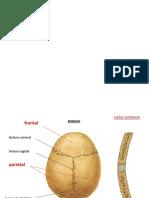 Roteiro Esqueleto Axial