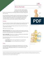 Spondilosis Cervical
