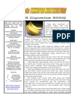 Buletin Teknopro - pisang (8).pdf