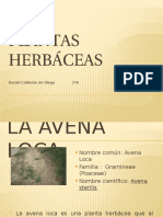 Plantas Herbaceas .naturales