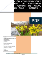 Proyecto Las Lomas de Asia(1)