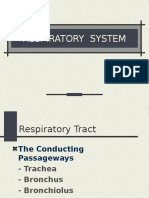 3041 Respiratory System-faal