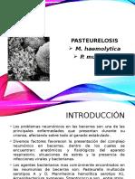 Pasteurelosis