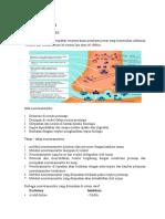 Biokimia Sistem Saraf