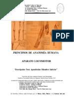 Osteologia Miembro Inferior Kine 2012