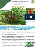 Familia Heliconiaceae