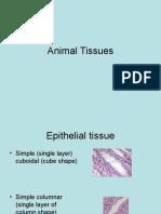 Animal Tissues.ppt