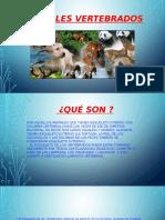 Presentación (9)