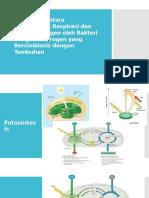 Hubungan Antara Fotosintesis, Respirasi Dan Fiksasi Nitrogen
