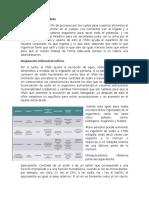 FUNCIONES DEL RIÑON.docx