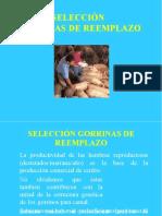 04 Seleccion de Gorrinas