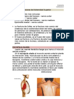 LesionesPlexo.doc