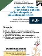 Organización del Sistema Nervioso, Funciones Básicas de las Sinapsis y neurotransmisores.