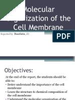 Molecular Organization of the Plasma Membrane