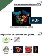 Chapitre 11La Régulation Des Gènes Chez Les Procaryotes