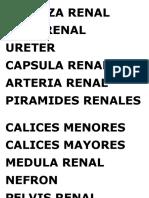 Corteza Renal