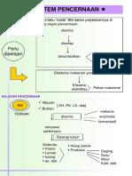 digesti-ruminansia.pdf