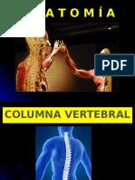 Columna Vertebral (1)