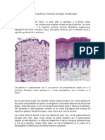 Dermis e Hipodermis Escrito