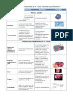 Celula Eucariotica y Sus Funciones
