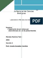 P.12 ELECTROFORESIS.docx